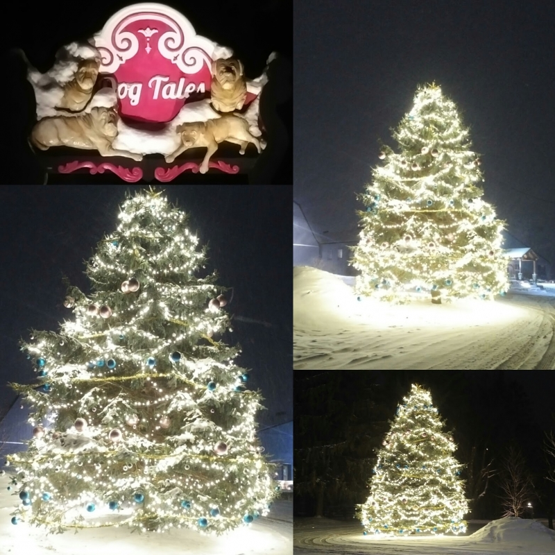 Dog Tales Sanctuary King City ON Spruce tree wrapped in thousands of 5mm LED lights with ornaments