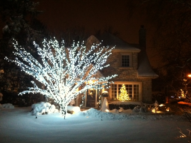 Cool White trunk and branch wrap in Etobicoke on Japanese Maple - Christmas