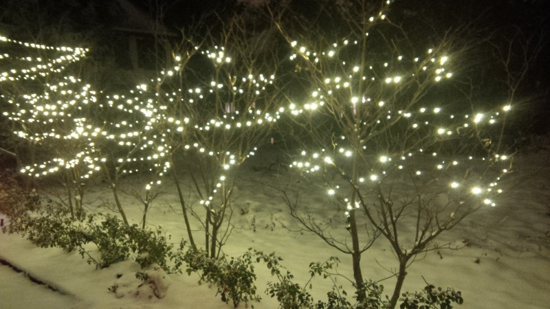 Young shrubs Spiral wrapped in warm white LED lights to protect fragile branches