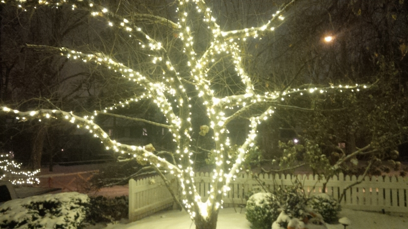 Trunk and branch wrap on crabapple tree warm white LED mini lights
