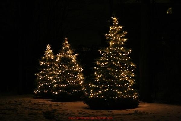 mini Led lights on spruce Christmas tree