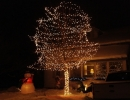 Trunk wrap and Spiral wrap Christmas lights on deciduous tree in Aurora