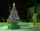 Live Christmas trees supplied in to adorn patio so guests can enjoy the Christmas ambiance while dining