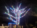 Multi Colour mm LED lights trunk and branch wrap on Maple tree