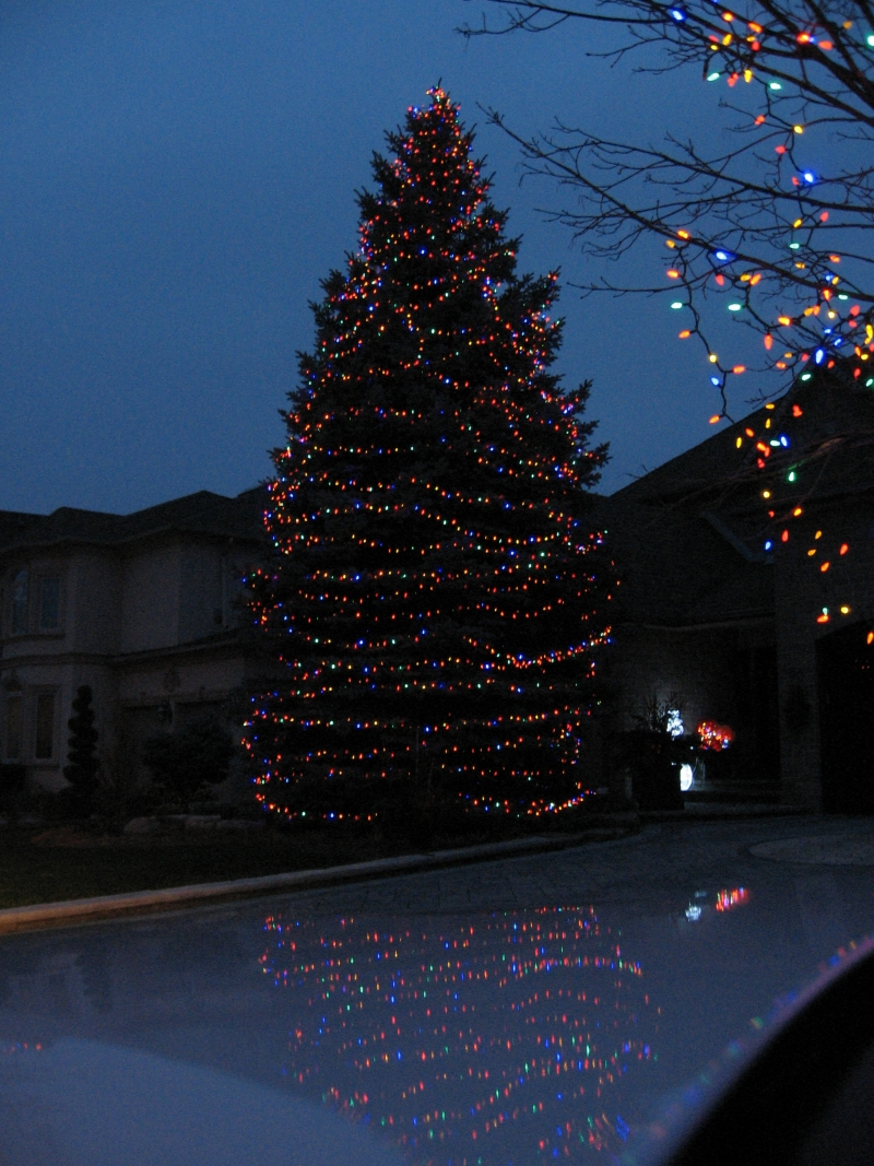 well lit multi colour spruce tree (1)