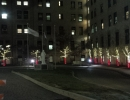 Candy cane style trees St. Joes Toronto by LawnSavers